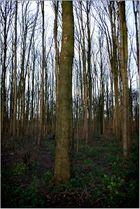 Trees in Pollock Park, Glasgow