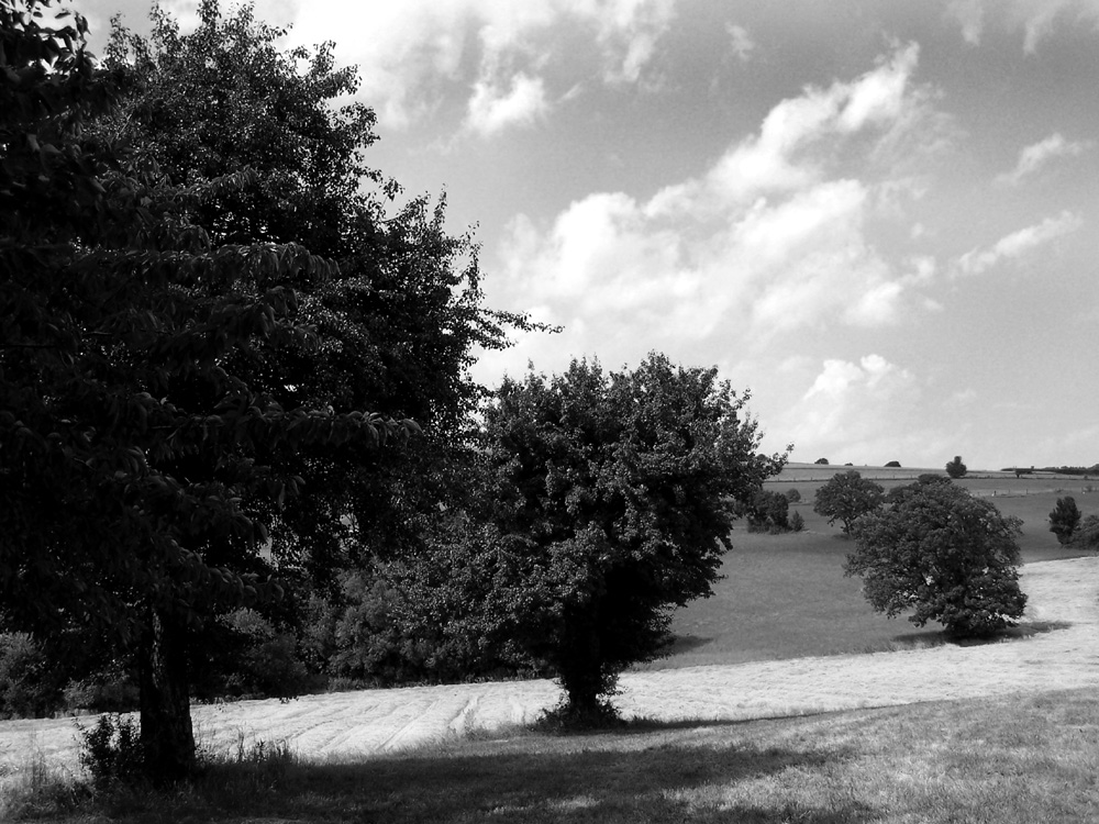 Trees in the field I