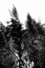 trees of fantasie (part one)