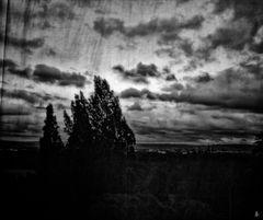 trees of 'kassel' (part 4)