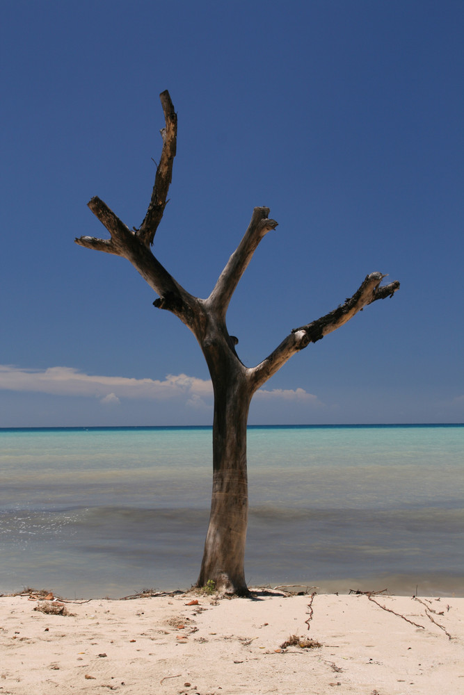Trees on the Beach I