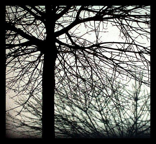 -tree/shadow-