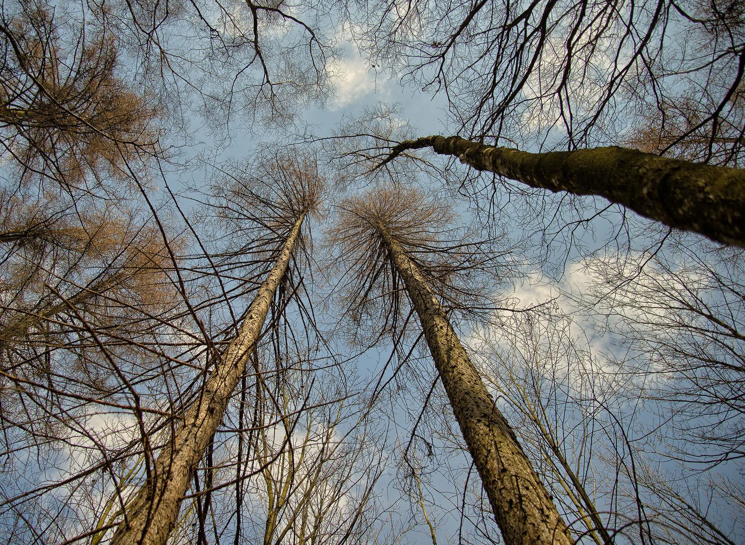 treetop #2