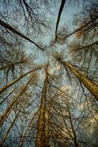 treetop #3