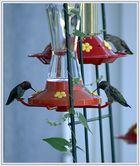 Treffen der Hummingbirds