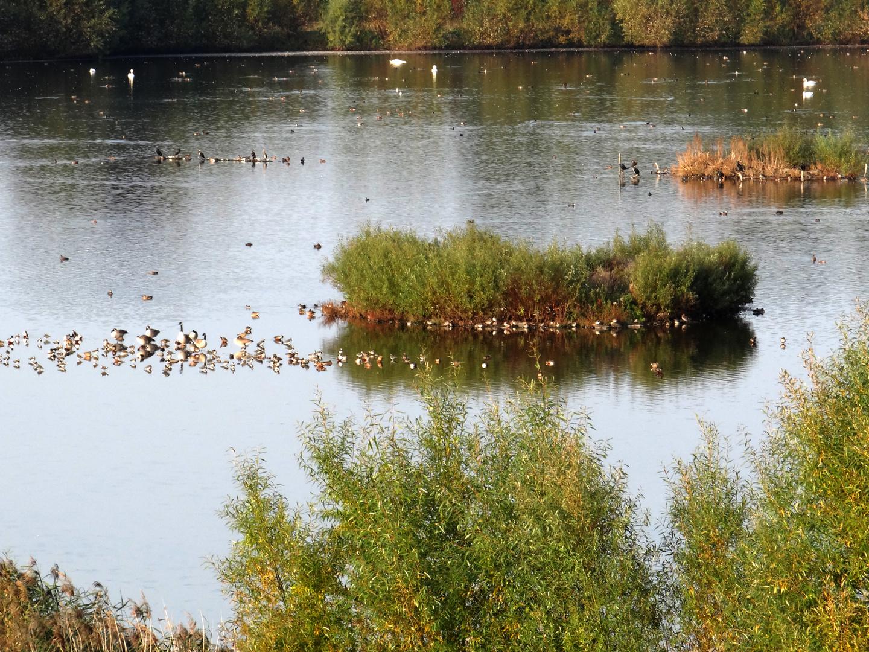 Treffen der Wasservögel