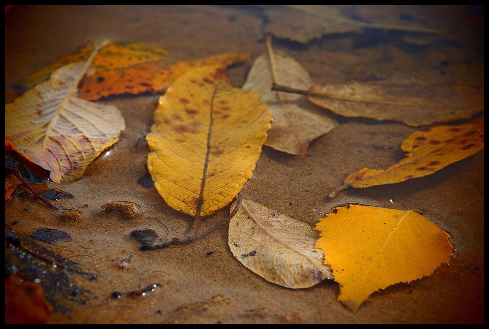 Treibende Blätter