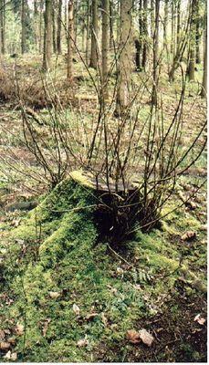 Treibender Baumstumpf