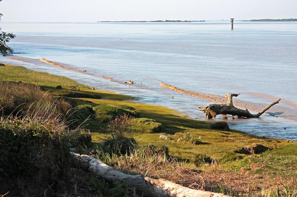 Treibgut an der Gironde!