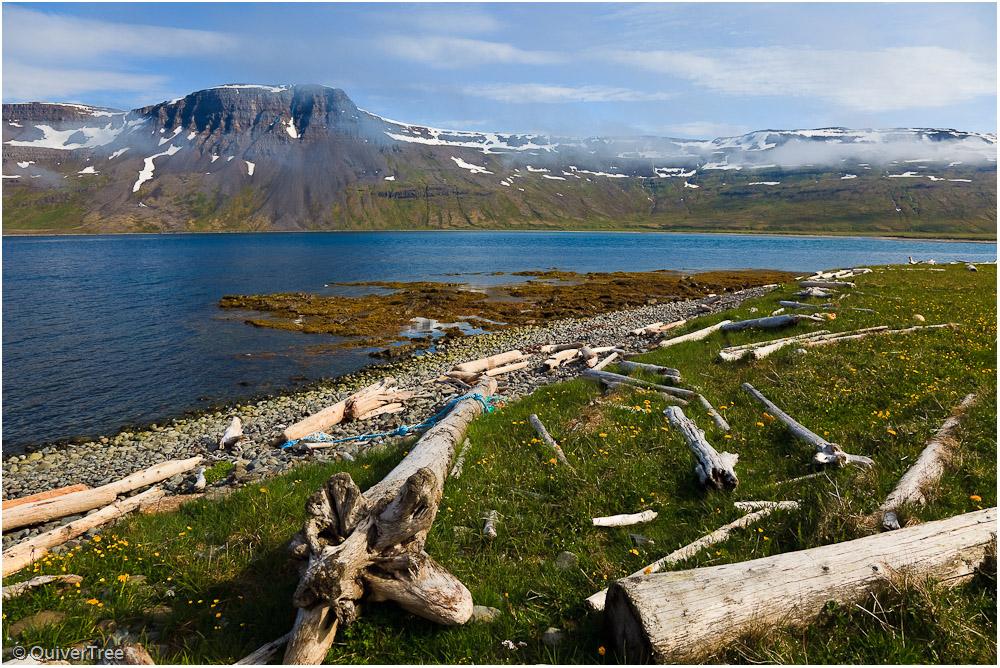 Treibholz im Furufjörður, Hornstrandir, Island.