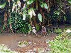 Trekking Pause im Regenwald