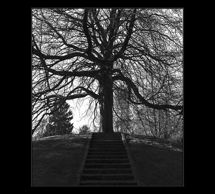Treppe-Baum