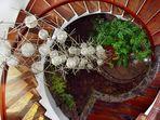 Treppe im Jardin de Cactus