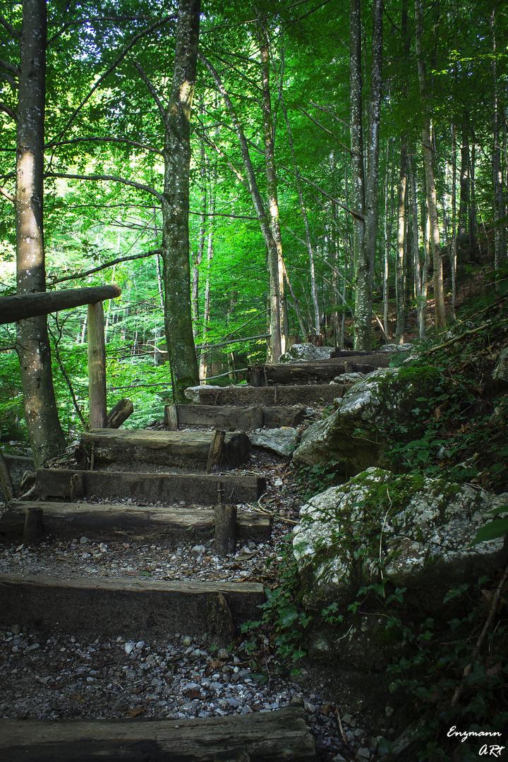 Treppe im Wald am Lainbach