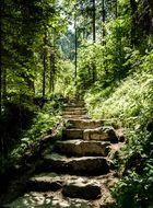 Treppe im Wald