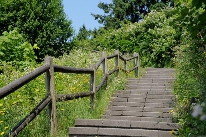Treppen ins grüne