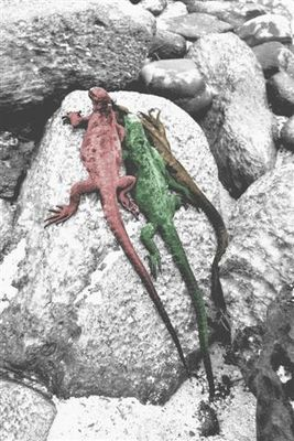 tres iguanas
