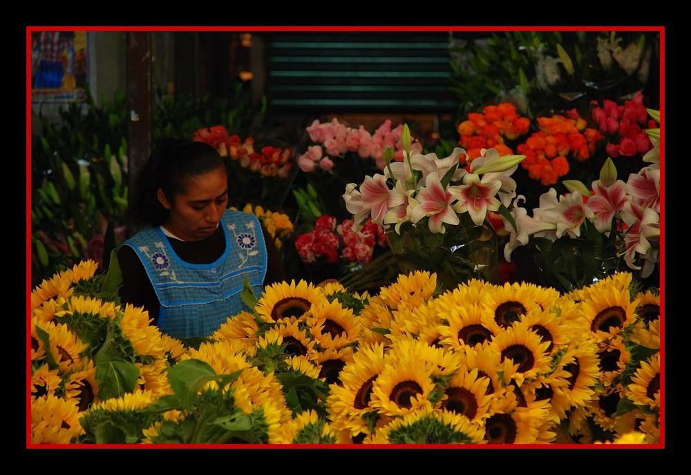 Très loin de chez moi, une fleur parmi les fleurs