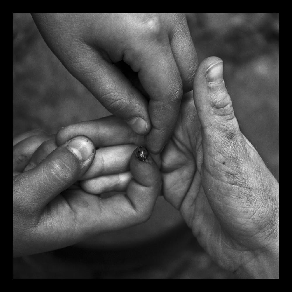 Tres manos y una mariquita