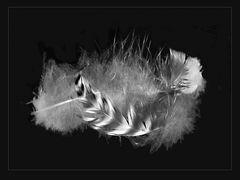 Tres plumitas-Drei Federn SW