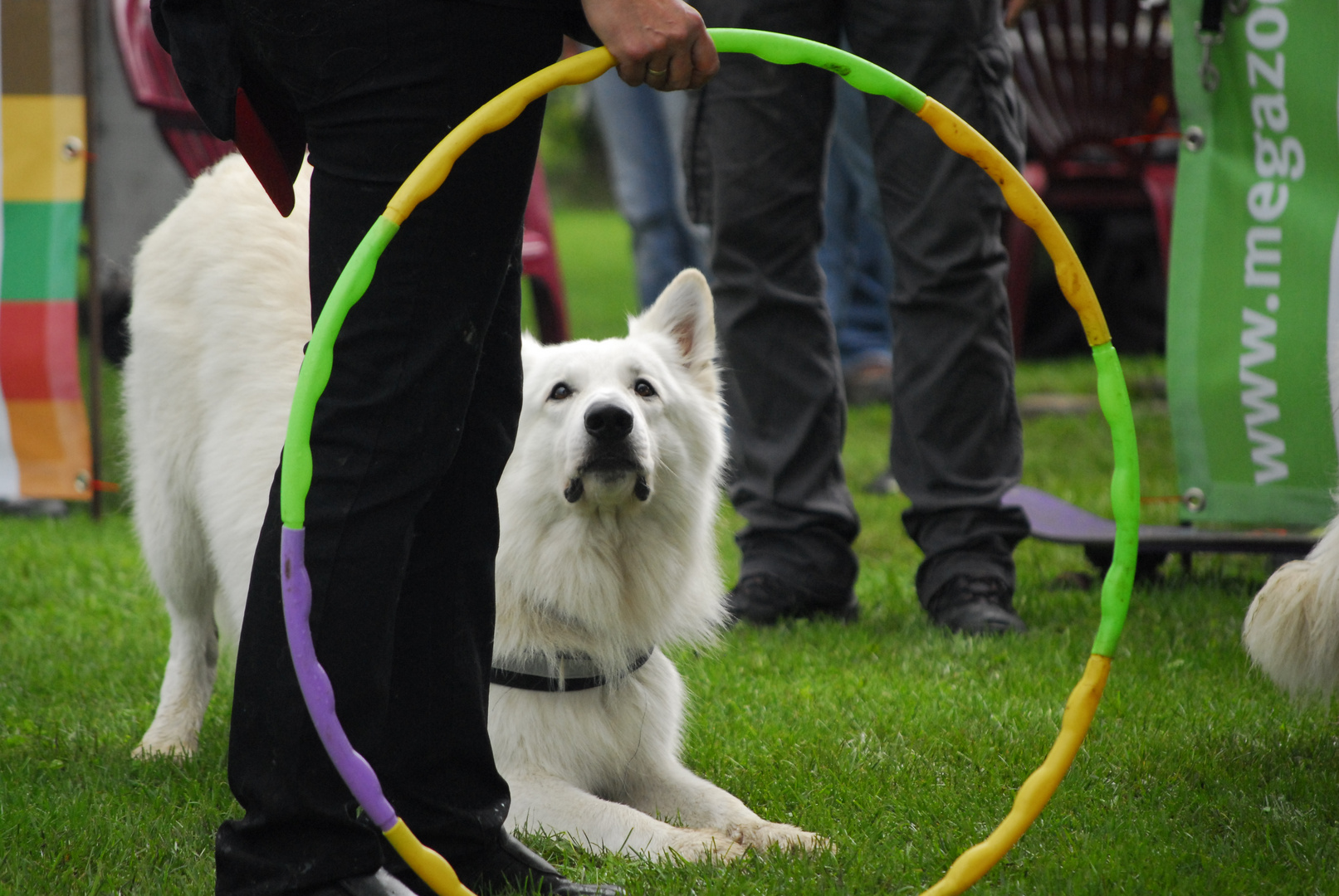 Trickdog-Competition