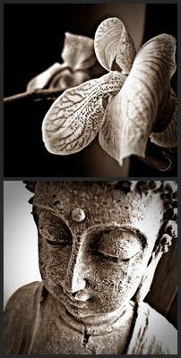 /.triffst du buddha unterwegs.. dann töte ihn../
