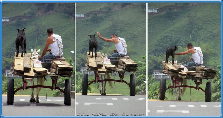 Triptico: hombre - caballo - perro