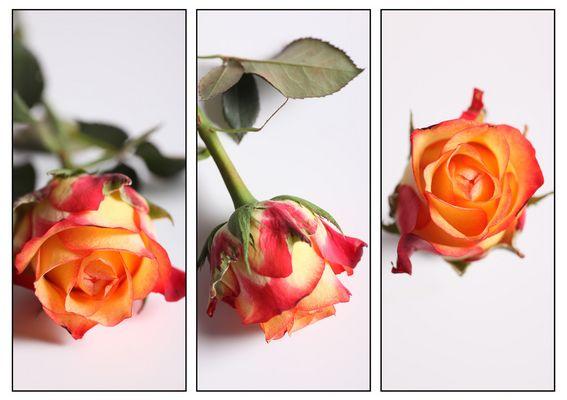 Triptique de fleur