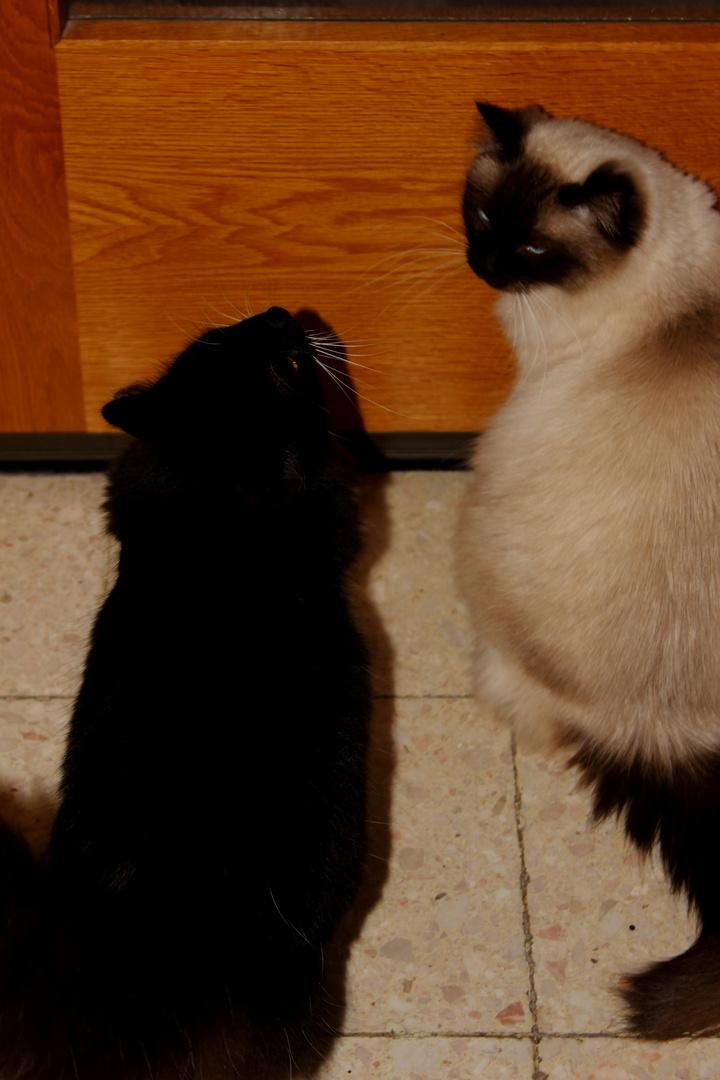 Tristan und Filou haben einen Plan