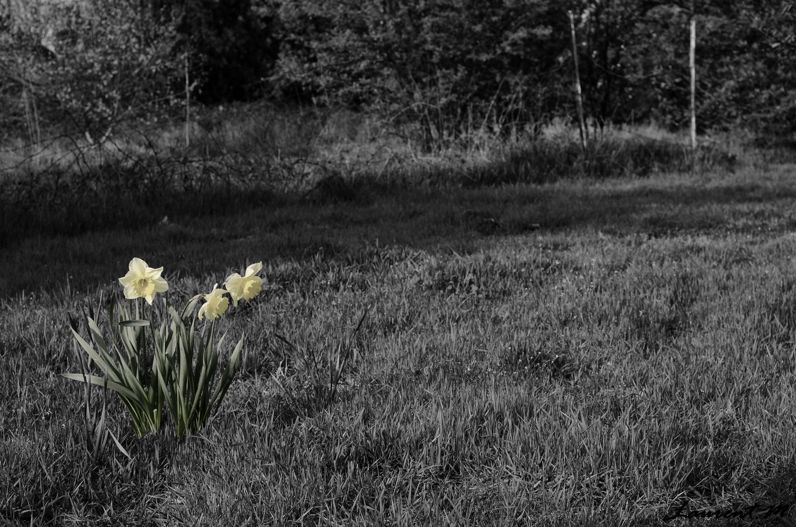 """ Triste printemps """