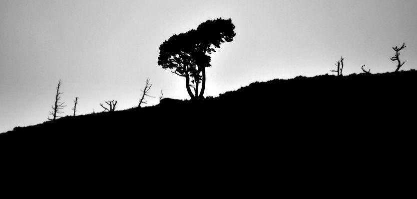 Tristesse d'un arbre solitaire