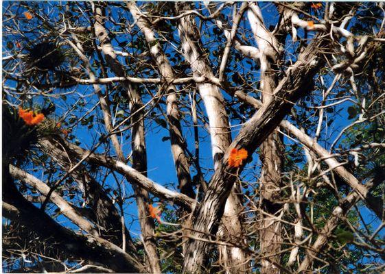 Trockenbaum in Blüte