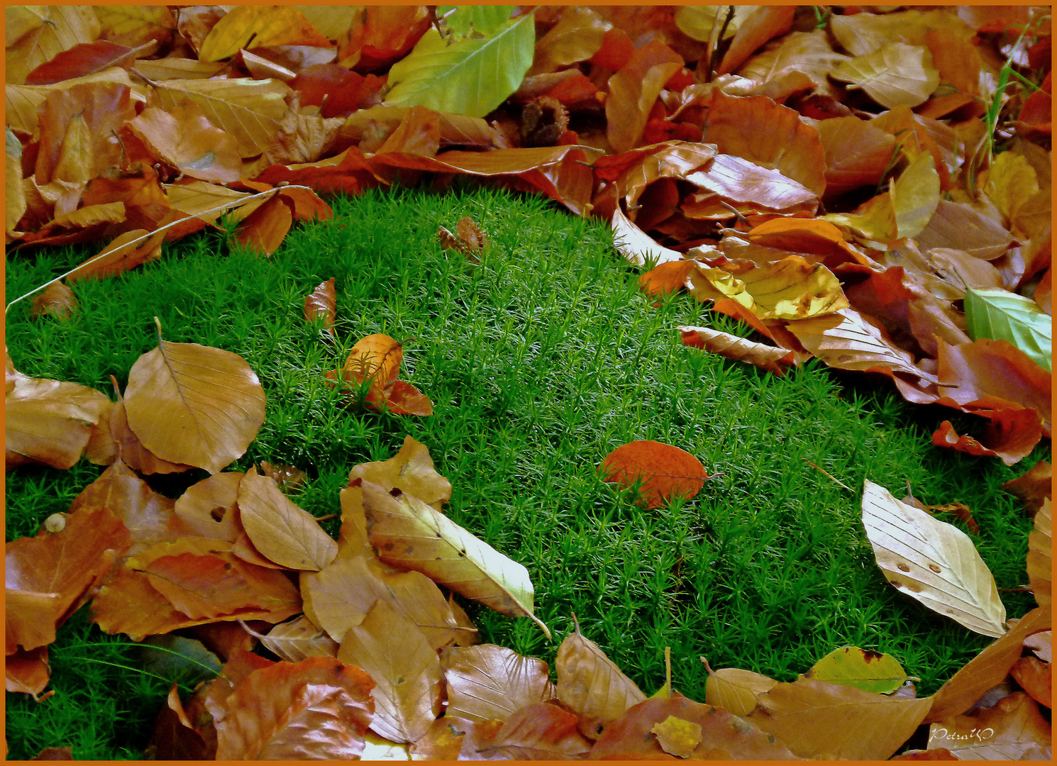 Trockene Blätter und saftiges Moos