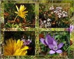 Trockenrasen-Flora