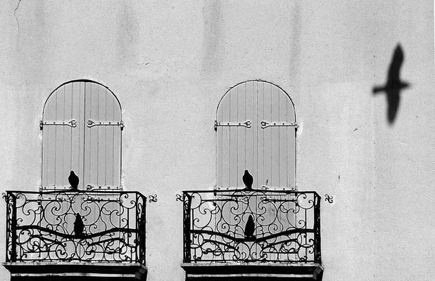 Trois oiseaux...