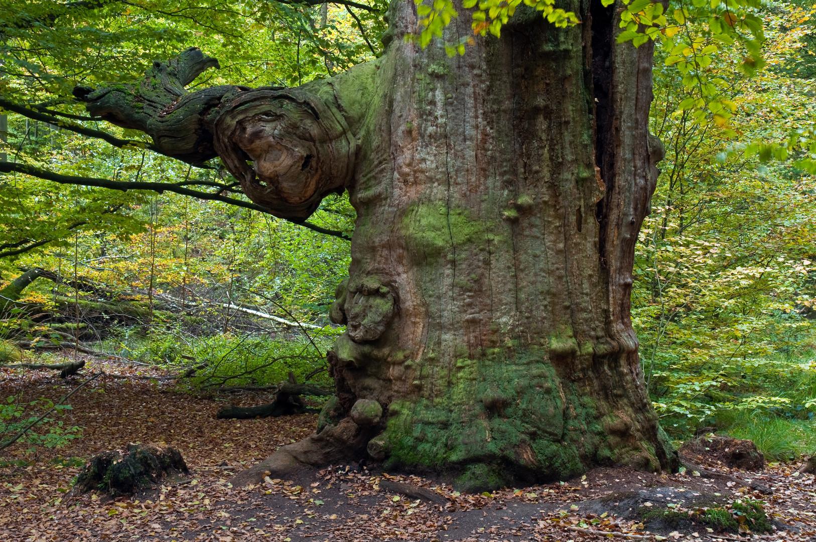 Trolle im Baum