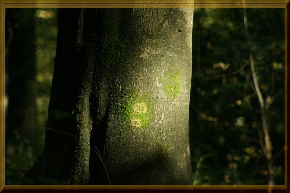 Tronc d'arbre frappé par le soleil d'automne.