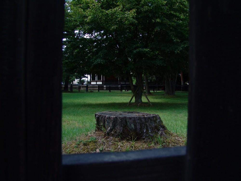 Tronc d'arbre tronqué