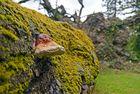 tronc et champignon, arboretum des barres