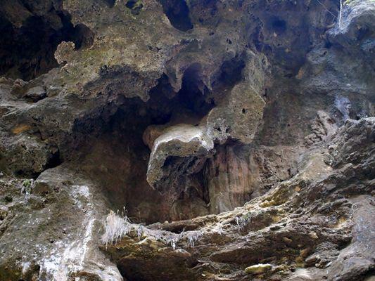 tronchi fossilizzati