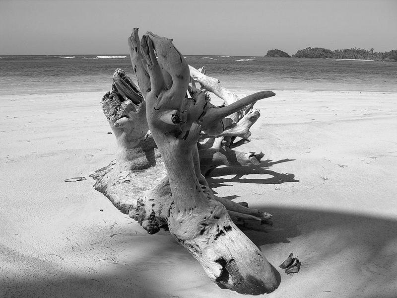 tronco caraibico