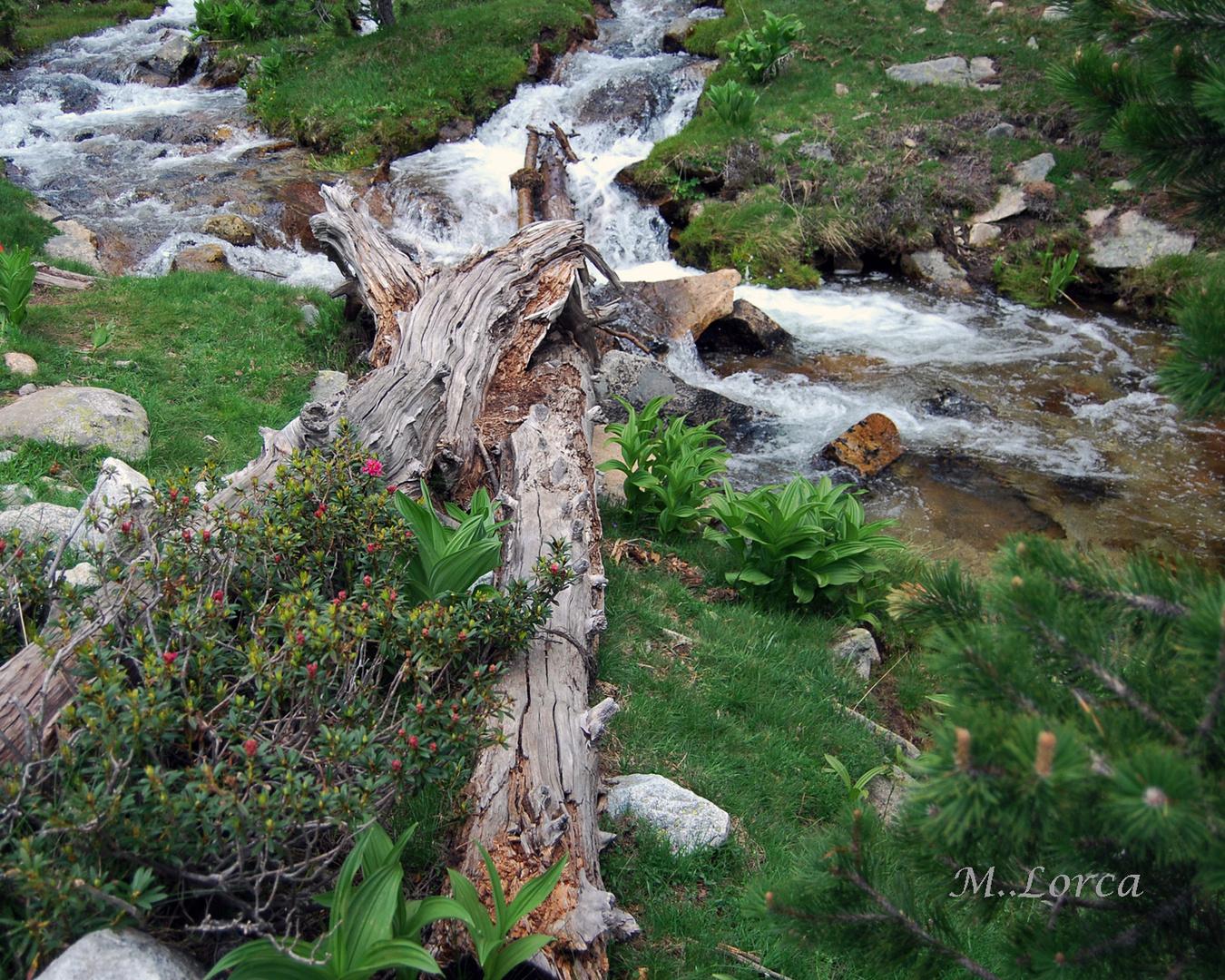 tronco florido