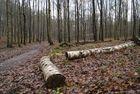 troncs d'arbres, forêt de clermont, oise