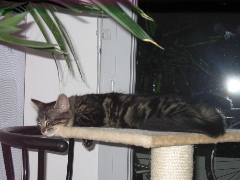 Trop dur la vie de chat
