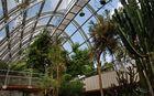 Tropenhaus im botanischen Garten in Graz!