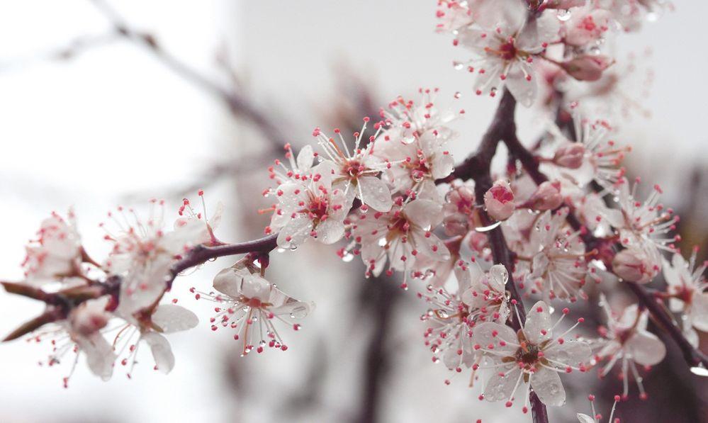 Tropfen auf Blüten von Heelene