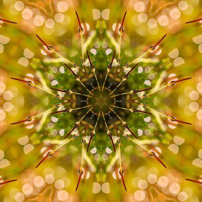 Tropfen-Kaleidoskop