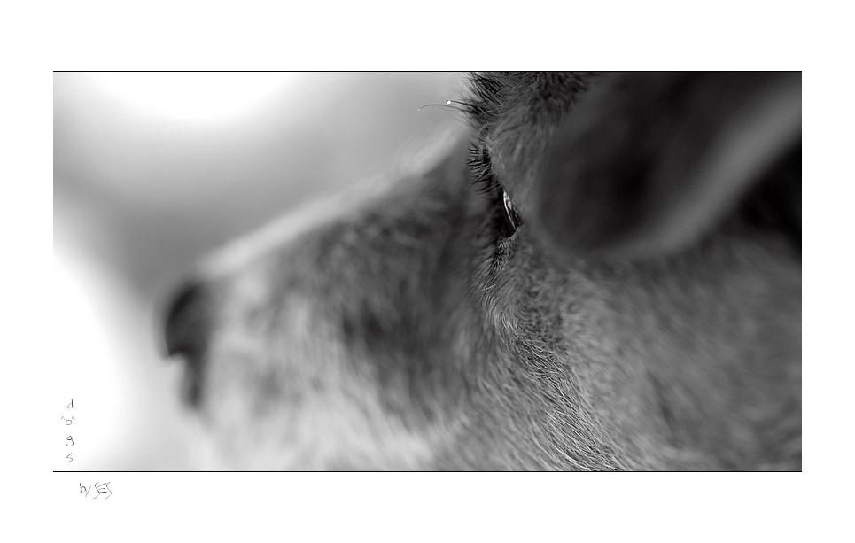Tropfenbild mit Hund