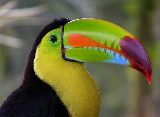 ___tropical_color___