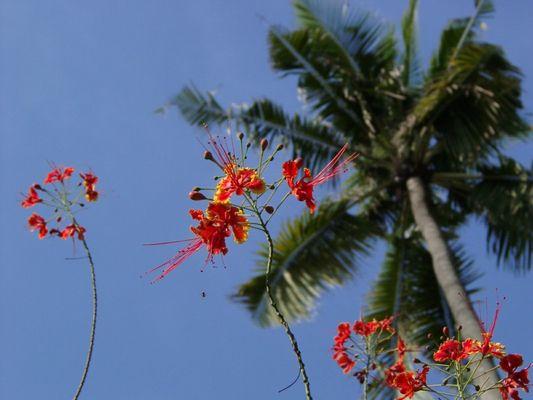 Tropische Fliege mit Blümchen vor Palme